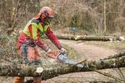 Rund 1000 Bäume müssen in Schaan in den kommenden Wochen gefällt werden. (Bild: Daniel Schwendener)