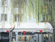 Was die Stadt hergibt: Maurice Maggi pflückt in Zürich junge Buchenblätter. (Bild: Juliette Chrétien)