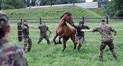 Pflege, gutes Futter und viel Bewegung: Rekruten der Schweizer Armee kümmern sich um die 93 Pferde. (Bild: Pascal Bloch/KEY (Sand-Schönbühl, 10. August 2017))