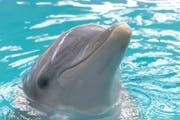 Das Connyland und seine Delfinhaltung kommen nicht aus den Negativschlagzeilen. (Bild: Archiv/Chris Mansfield)