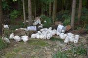 Der Mann hatte 150 Hühner im Wald ausgesetzt. (Bild: Mario Testa)