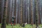 Ein Jäger auf der Jagd im Wald. (Bild: ALEXANDRA WEY (KEYSTONE))