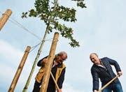 Eine Eiche und zwei Männer: Open-Air-VR-Präsident Wolfgang Sahli und Geschäftsführer René Götz bei der Baumpflanzung. (Bild: Mathias Frei)