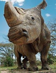 Sudan, das letzte Männchen seiner Art. (Bild: EPA)