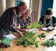 Das Bestimmen und Verarbeiten von Pflanzen ist ein zentrales Thema der Kräuterakademie. (Bild: PD)