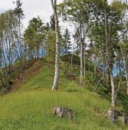 Dank Holzschlag zur Auslichtung sind neue Lebensräume entstanden. (Bilder: pd)
