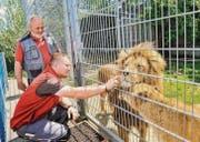 Louis und Lisa geniessen die Streicheleinheiten des neuen Betriebsleiters Christoph Wüst, Plättli-Zoo-Direktor Walter Mauerhofer beobachtet. (Bild: Donato Caspari)