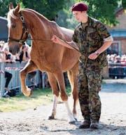 Ein Armeeangehöriger führt eines der Pferde zum Verkauf vor. (Bild: Anthony Anex/KEY)