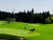 Das Rind büxte aus und trampelte über den Golfplatz in Neuenkirch. (Bild: Staatsanwaltschaft Luzern)