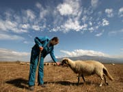 Weniger Geld für die Bauern nach dem Austritt Grossbritanniens aus der EU: Die EU-Kommission will die Mittel für die Landwirtschaft reduzieren. (Symbolbild) (Bild: KEYSTONE/AP/PETAR PETROV)