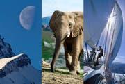 Zunehmender oder abnehmender Mond? Afrikanischer oder Indischer Elefant? Ist der Mann auf der Luv- oder Leeseite des Segels? Die Lösungen finden Sie am Textende. (Bild: Keystone/Getty)