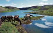 Auf langen Touren wird eine Herde mitgetrieben, um das Reitpferd wechseln zu können. (Bild: Alexandra Gächter)