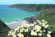 Grüne Küsten, blühende Pflanzen und ein klares Meer prägen das Bild von der Kanalinsel Guernsey im Frühling. (Bild: Matthias Hafen)