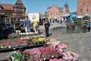 Samstagsmarkt in Svendborg, der zweitgrössten Stadt auf der Märcheninsel Fünen. (Bilder: Lutz Redecker)