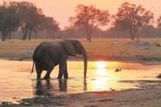 Ein Elefant trinkt am Wasserloch im Hwange-Nationalpark in Simbabwe. (Bild: Win Schumacher)