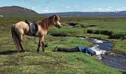 In Island liegt die nächste Siedlung teilweise mehrere Reitstunden entfernt. Gut, Islands kaltes Quellwasser ist eines der besten in Europa.