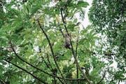 Faultiere werden in Costa Rica für ihre Langsamkeit geliebt.