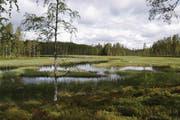 Ein Blick auf den typischen Wechsel von Wald und Moor, der Autofahrer auf dem Weg nach Laponia begleitet.
