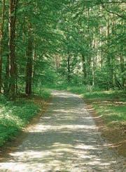 Mecklenburg ist ein Wanderparadies, besonders um den Malchiner See. (Bild: Andreas Z'Graggen)