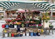 Auf dem steirischen Bauernmarkt neben der Oper von Graz werden Blumen verkauft. (Bild: Karte oas)