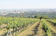 Der Wiener Weingarten «Rotes Haus» am Nussberg: Der Boden und die Südlage zur Donau verleihen dem Wein seine Würze und mineralische Terroirnoten. (Bild: Thomas Veser)