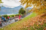 Läufer auf der Horwer Halbinsel am 9. Swiss City Marathon Lucerne 2015. (Bild: Roger Grütter / LZ)