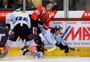 Brunner (l.) und DiPietro (r.) kämpfen gegen den Langnauer Sutter um den Puck. (Bild Keystone)