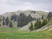 Sicht auf den 1697 Meter hohen Mont Tendre. (Bild: Melchior Rudenz)