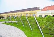 Die Unesco-Welterbestätte Schloss Schönbrunn hat ihren eigenen Weingarten. (Bild: Thomas Veser)