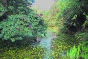 Lost Gardens of Heligan: Die «verlorenen Gärten» sind eine Mischung aus gepflegter englischer Gartenkultur und wildem Märchenwald. (Bild: Geraldine Friedrich)