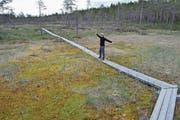 Der Hamra-Nationalpark bietet einen Vorgeschmack auf die Wildnis Lapplands.