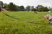 Bei Kursen kann Hunden abtrainiert werden, gefundenes Futter zu fressen. (Bild: Keystone)