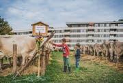 Kühe vor Mehrfamilienhäusern: Die Viehschau in Haggen ist eine von zwei in der Stadt. (Bild: Jil Lohse)