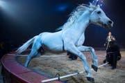 Ivan Frederic Knie mit seiner Pferdenummer an der Generalprobe des Circus Knie in Rapperswil. (Bild: Keystone)