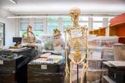 Letzter Schultag im Schulhaus Tschudiwies vor den Sommerferien 2017: Auch das Skelett für den Biologie-Unterricht muss mit. (Bild: Urs Bucher - 7. Juli 2017)