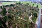 Burglind hat ganze Waldflächen gerodet. (Bild: Keystone)