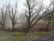 Blick von der Bildweiherstrasse her ins Areal des Naturschutzgebietes. (Bild: Franz Blöchlinger)