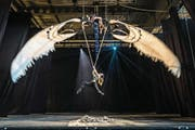 Noch ohne Kostüm und Profi-Beleuchtung: Jenny Ritchie und Marula Eugster (am Seil) proben die Szene «Big Bird». (Bild: Hanspeter Schiess)