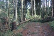 """Mit 3000 Kubikmeter Holz sind rund Drittel der Jahresnutzung """"Burglind"""" zum Opfer gefallen. (Bild: pd)"""
