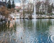 Auf dem Mühleggweier in St. Georgen schwimmen Enten schon seit 1914. (Bild: Urs Bucher)