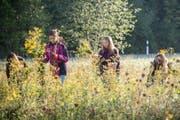 Schüler reissen in Wittenbach Neophyten aus. Die Pflanzen stellen im Naturschutz eine Herausforderung dar und bilden einer der Schwerpunkte der Tagung «Dialog Natur». (Bild: Urs Bucher (Urs Bucher))