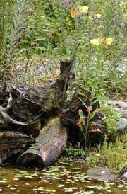 """Luzia Steiner von Bioterra St.Gallen und Umgebung setzt sich auch für """"wilde Nischen"""" in den Stadtgärten ein. Wer ein wenig """"natürliche Unordnung"""" zulässt, unterstützt die natürliche Vielfalt. (Bild: Barbara Hettich)"""