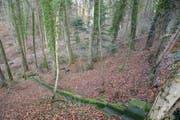 In diesem Waldstück wurde die in einen Teppich eingewickelte Leiche gefunden. (Bild: tz)