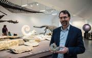 Museumsdirektor Toni Bürgin zeigt einen Ammoniten aus der Sammlung des Naturmuseums. (Bild: Sabrina Stübi)