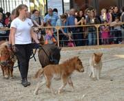 Auch Mini-Ponys sind an der Offa 2018 zu sehen. (Bild: PD)