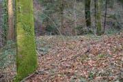An dieser Stelle in einem Wald bei Zezikon fand ein Mann den Teppich mit der eingewickelten Leiche einer Frau. (Bild: Mario Testa)