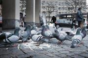 Das sieht die Polizei nicht gerne: Am Marktplatz werden Tauben gefüttert. (Bild: Jakob Ineichen)
