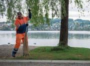Hält das Gelände der Luzerner Ufschötti sauber: Harkou Abdallah vom Strasseninspektorat. (Bild: Boris Bürgisser (Luzern, 2. Mai 2018))