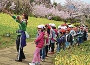Eine Schulklasse aus der Region besichtigt die Blütenpracht. (Bild: Angela Köhler (Fukushima, April 2018))