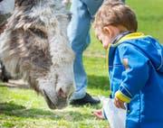 Anfang April war im Tierpark Kreuzlingen Tag der offenen Tür. (Bild: Andrea Stalder)
